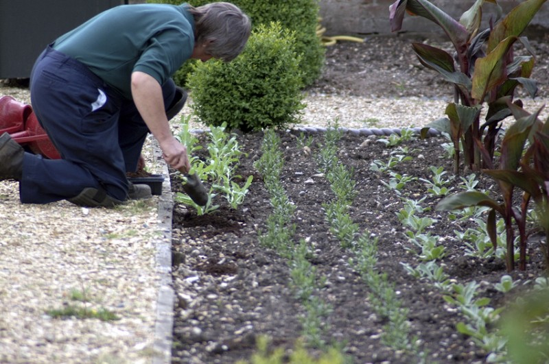 Allotment funding opportunity for community groups in the west