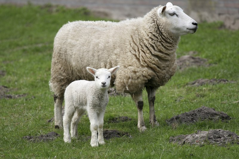 Important advice for pregnant women during lambing season